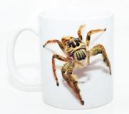 Kaffeebecher Hyllus diardi