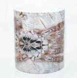 Kaffeebecher Stromatopelma calceatum