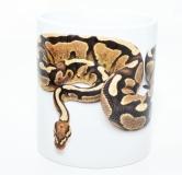 Kaffeebecher Python regius 1