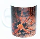 Kaffeebecher Brachypelma boehmei 1