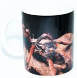 Kaffeebecher Pamphobeteus spec. SOLARIS
