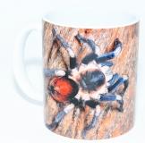 Kaffeebecher Hapalotremus vilcanota