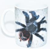 Kaffeebecher Grammostola actaeon