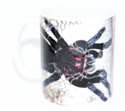 Kaffeebecher Pamphobeteus nigricolor