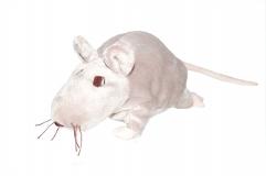 Rattus plüschicus