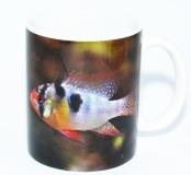 Kaffeebecher Mikrogeophagus ramirezi