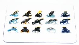 Kühlschrankmagnet Dendrobates tinctorius Formen